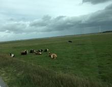 сельские ландшафты Дании